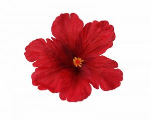 Debra Red Hibiscus Hair Flower