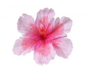 Debra Pink Hibiscus Hair Flower