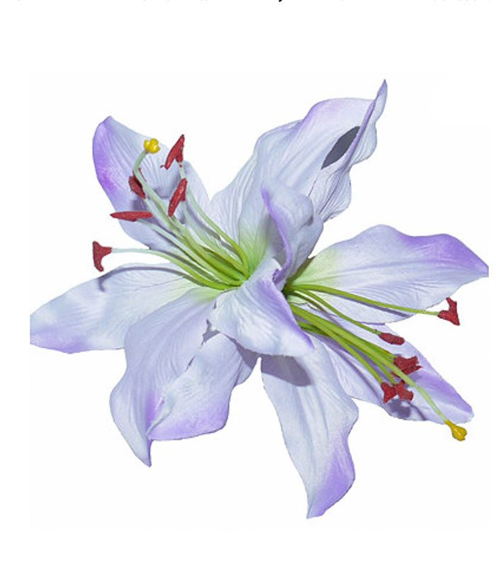paloma_double_lilac_lilly