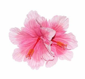 Debra Double Pink Hibiscus Hair Flower