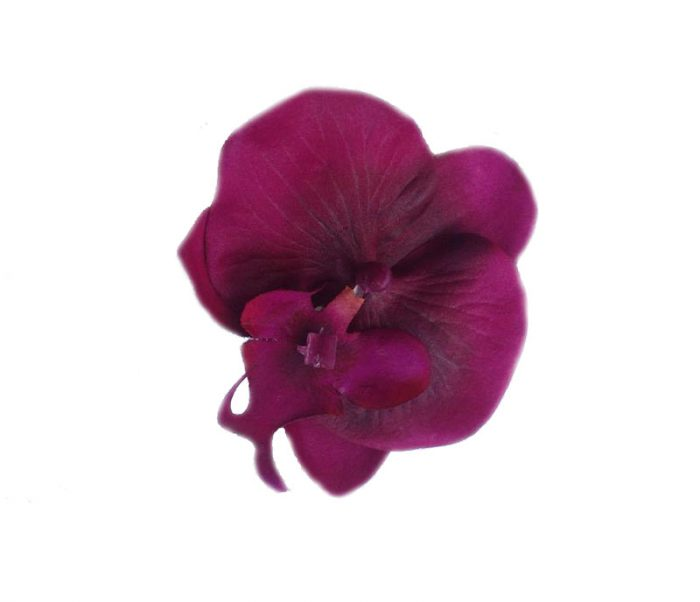 Sherrie Magenta Orchid Hair Flower